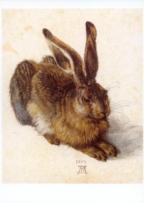 Albrecht Dürer. Feldhase, 1502. KK