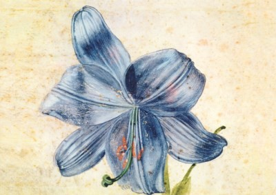 Albrecht Dürer. Studie einer Lilie, 1809