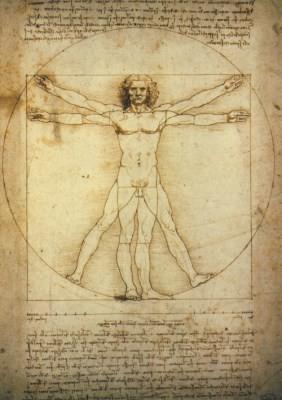 Leonardo da Vinci. Studio del corpo umano