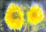 Ruth Elsässer. Sonnenblumen. KK