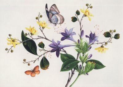 Chinesisch, 19. Jahrhundert, Blumenstudie und Insekten