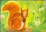Stinner, H. Eichhörnchen. KK