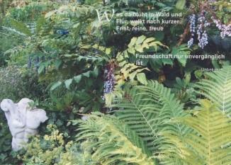 Steffens-Knutzen. Was da blüht in Wald und Flur. Foto-DK
