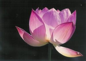 Wu, Gang. Blume. Foto-KK