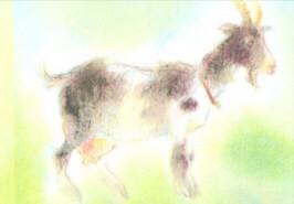 Grills, C. Meine Tiere 3, Ziege. KK