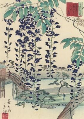Utagawa Hiroshige. Blauregen (Glyzinie), 1866